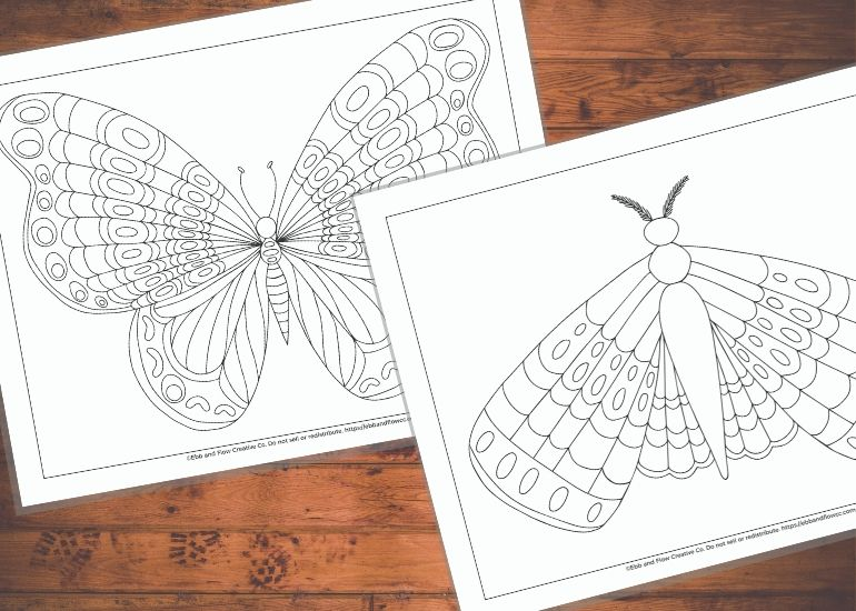 moth and butterfly coloring page