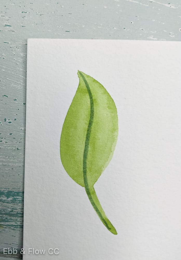 leaf with vein in the middle