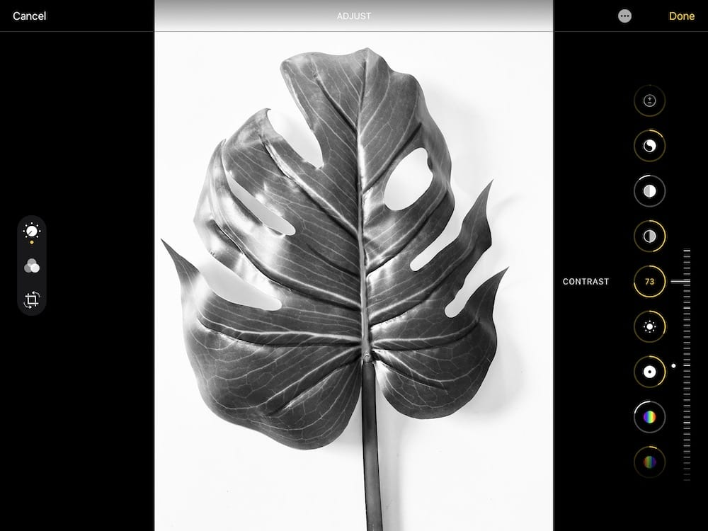 increasing contrast of photo of tropical leaf
