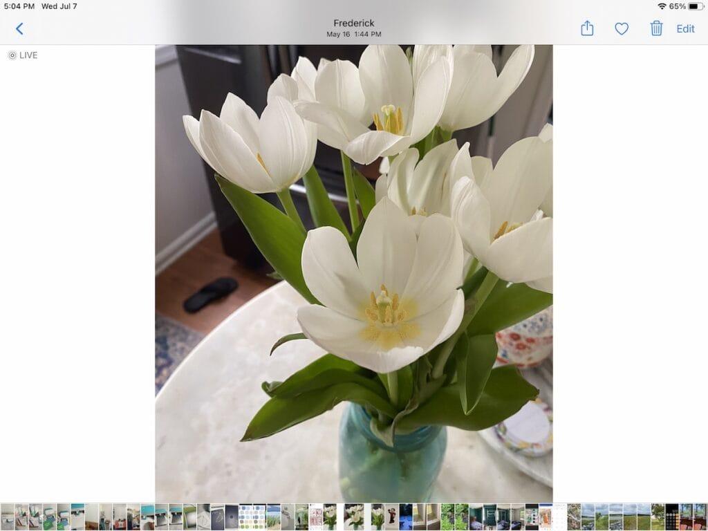 photo of white tulips in mason jar